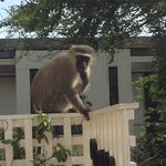 A monkey on the balcony