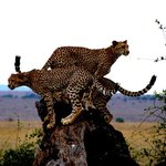In2kenya - Day Tours