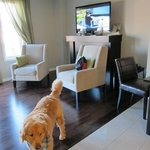  living room......plenty spacious enough for a dog!!