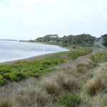  Swan Bay - look for the Black Swans