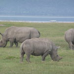 Overland Travel Adventures - Private Day Tours