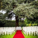 Wedding under the tree