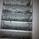 Mold on Bathroom Air Vent
