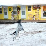 Dog and motel