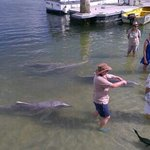  Dolphin feeding.