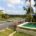 Pool overlooking ricefields