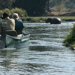 Encountered lots of hippos - thank goodness for Expert Guides