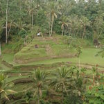 'suburbs' of ubud