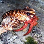 Hermit crabs in the rock pool