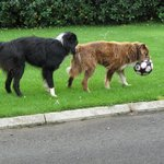  Red &amp; Ben - very friendly B&amp;B dogs