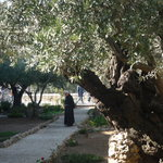 Garden of Gethsemane
