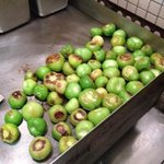 Roasted tomatillos for salsa!