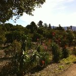 the campground is surrounded by classic Calif orange, lemon & avocado orchards.