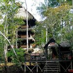 Tapir Lodge
