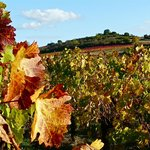  Autumn colours in the vineyards