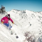 Foto de Utah Mountain Resort Tours- Day Tours