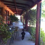 Arvi the miniature poodle exploring the communal verandah