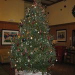 Lovely tree in lobby
