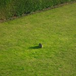  View from our room - Rabbits on the grass outside