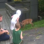 two of my children and the deer they were giving baby carrots to. (not by hand)