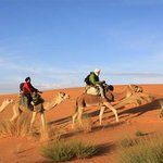 Best Travel Morocco - Day Tours