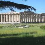  Paestum we discovered by accident while looking for La Civetta.