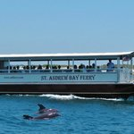St. Andrew Bay Ferry, Dolphins and Shell Island