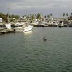 Foto de Sunshine Key RV Resort & Marina