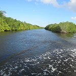 North fork of St Lucie River