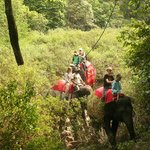 on the back of an elephant through the bush