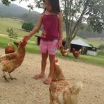 loved the chickens!!!