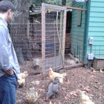 New Chicken Coop!