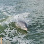 Dolphin playing in our boat waves
