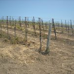 Clos Pepe Vineyards and Estate Wines
