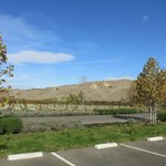 The vineyards of the Wente Winery, Livermore
