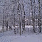                    Snowshoeing on the property