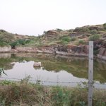 Arna Jharna: The Desert Museum of Rajasthan