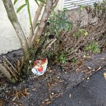 Perhaps litter is looked upon here as decorations