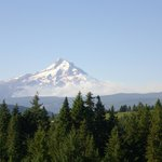 Mount Hood from Sakura Ridge