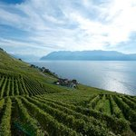 Lavaux Views