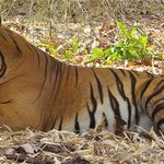 Land of the Tiger-Bandhavgarh.