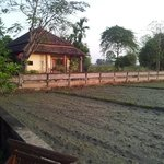 Our villa by the rice field
