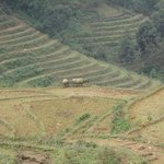 Trekking amongst Rice Paddies in Sapa