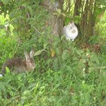"My Rabbits ""Nautilus"" & ""Narvik"" Play Outside #2"