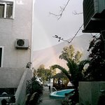                   ambrex  morning rainbow next to the pool