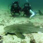 So near to the Leopard Shark. Pic by Mike. Thanks.
