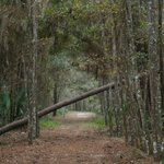                    view of another trail