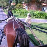 horse and carriage escort