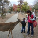  Feeding friendly deer