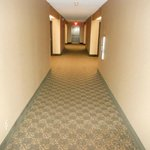                    The hallways... rug needs renovation